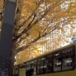 はとバス秋の人気ツアー!日帰りで楽しむ「おすすめ」コース!