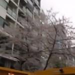 はとバスで桜のお花見&東京観光!人気のおすすめコースは?