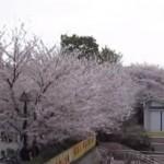 王子のお花見スポット「飛鳥山公園」の桜まつりとは?お弁当はどこで調達する?